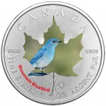 Kanada 5$ Maple Leaf Błękitnik 1OZ Ag.999 2017